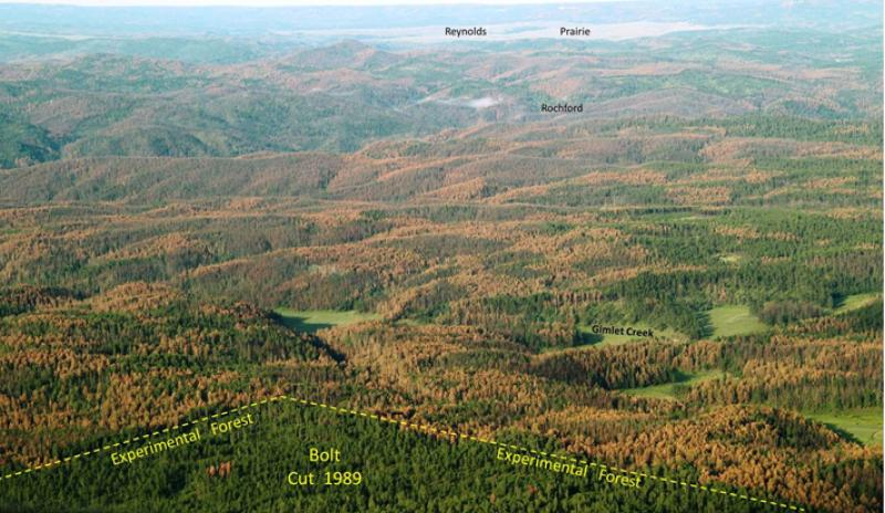 Contrast between a treated forest located on the Black Hills Experimental Forest which is capable of producing northern goshawk habitat and structures resistant to the mountain pine beetles.