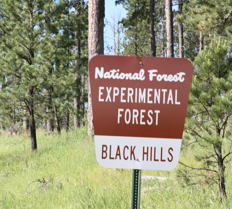 "The National Forest sign reads ""Black Hills Experimental Forest\"". Pine trees are visible in the background."