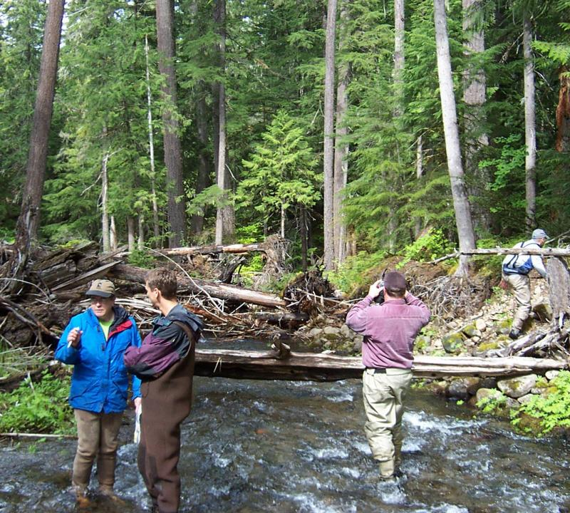 Three researchers stand in a stream in a forest during a bull trout habitat survey. A fourth researcher climbs up a slope beside the stream.