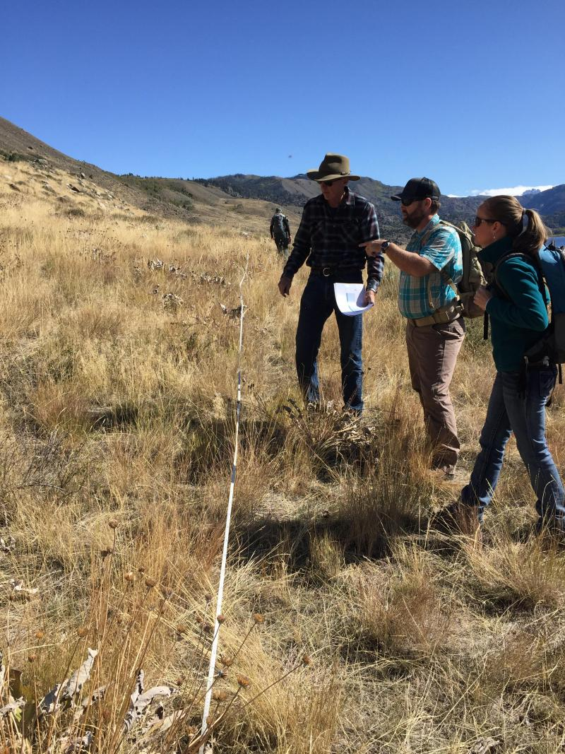 Three scientists standing in cheatgrass discussing appropriate measures to restore hilly landscape.