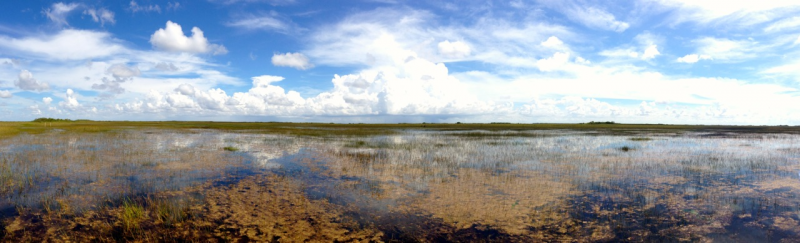 View of the Florida Everglades.