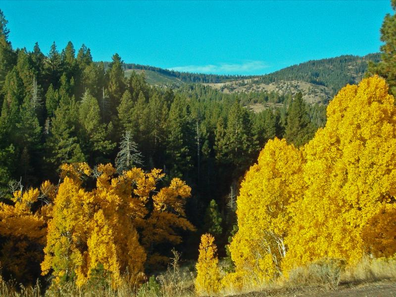 Fall colors in Granger Canyon, MOdoc National Forest