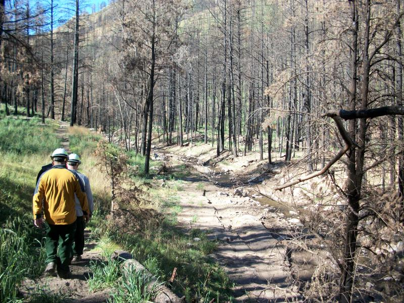 Resource managers examine post-fire effects within a stream channel after the Little Bear Fire on the Lincoln National Forest, New Mexico