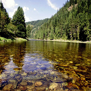 The quality of water draining forested watersheds is typically the best in the nation.