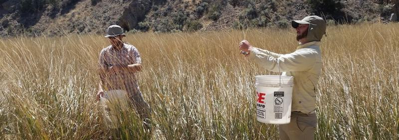 Researchers with the Great Basin Native Plant Project collecting native seeds in the field.