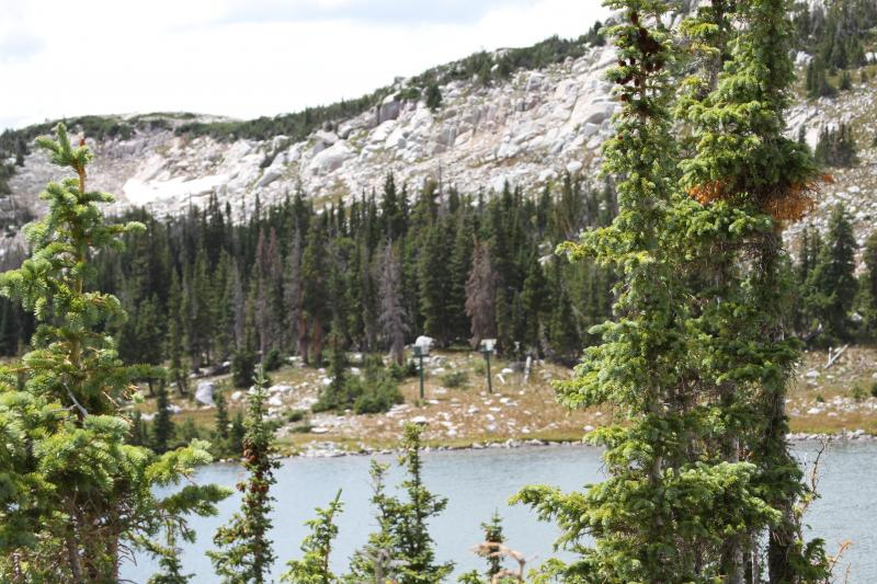 A forested watershed in Wyoming