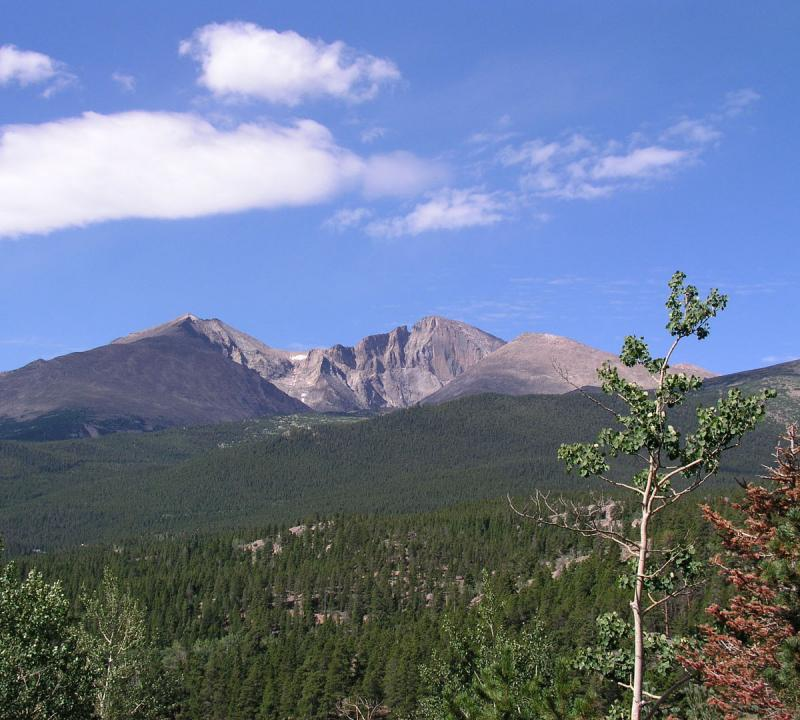 Longs Peak stands against a blue sky, a green landscape of forested land in the foreground.
