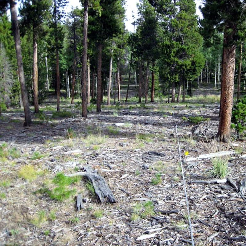 Lodgepole Pine and Mixed Conifer (LPMC) mulched