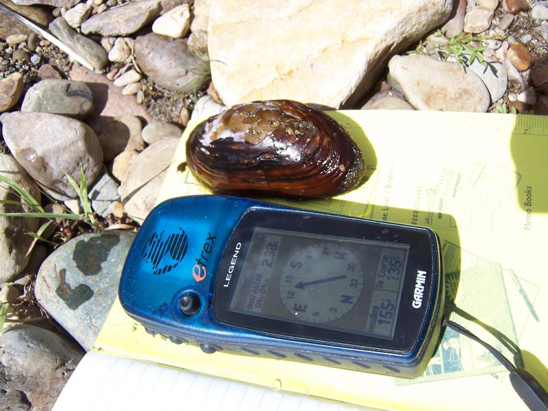 A western pearlshell sits next to a data reader. Photo by John Csoka, US Forest Service.