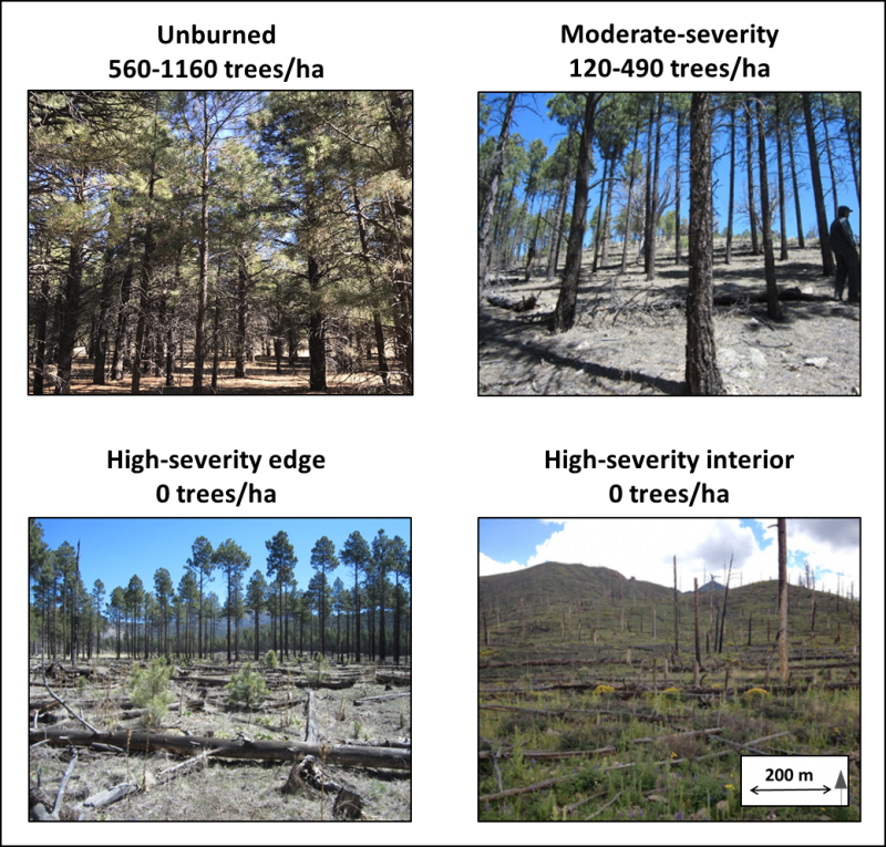 High-severity edge plots were established adjacent to forest edges, and high-severity interior plots were established at least 200 m from any live tree