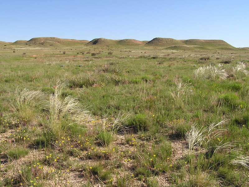 An image of a shortgrass prairie, showing an example of grasslands where RPMS can monitor vegetation production (photo by Steven Olson, USFS)