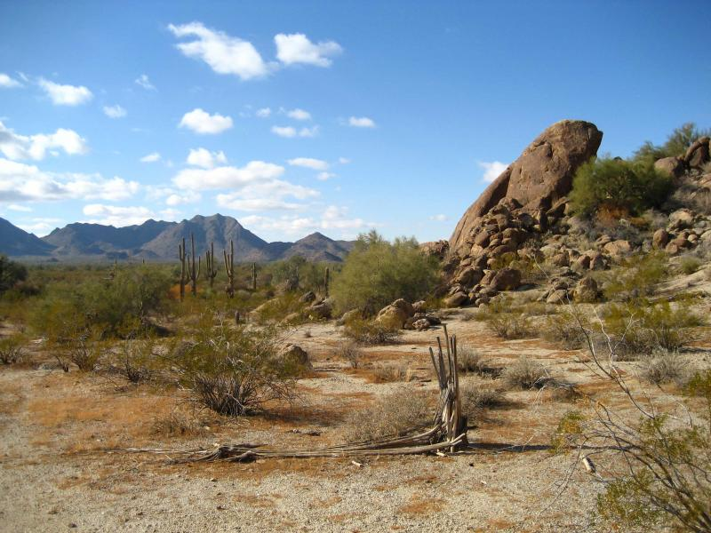 An image of the Sonoran Desert, another type of rangeland where the RPMS can be used to monitor production.