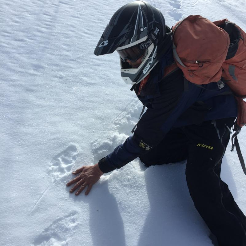 Scientist compares the size of mesocarnivore tracks to their hand size in the snow