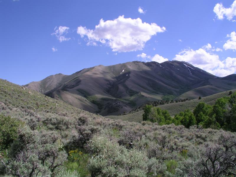 Mountain big sagebrush. Photo by Jeanne Chambers, USDA Forest Service RMRS