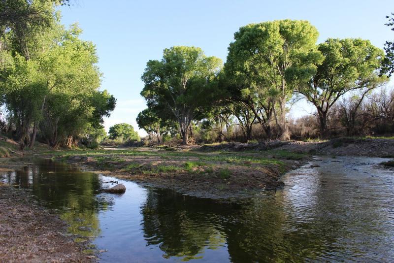 Picture of a tree-lined river bottom, showing riparian habitat on the San Pedro River.