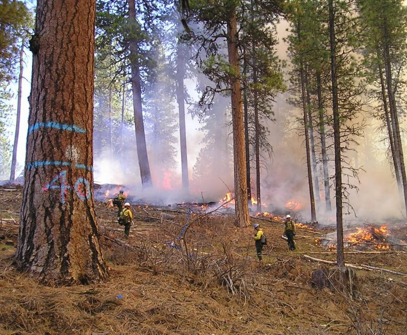 Prescribed burning can be an important component of restoration in frequent-fire forests.