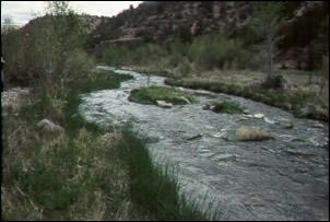 The Upper Verde River on the Prescott National Forest has been home to over 20 years of research.