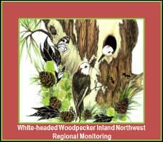 Logo for White-headed Woodpecker Inland Northwest Regional Monitoring.