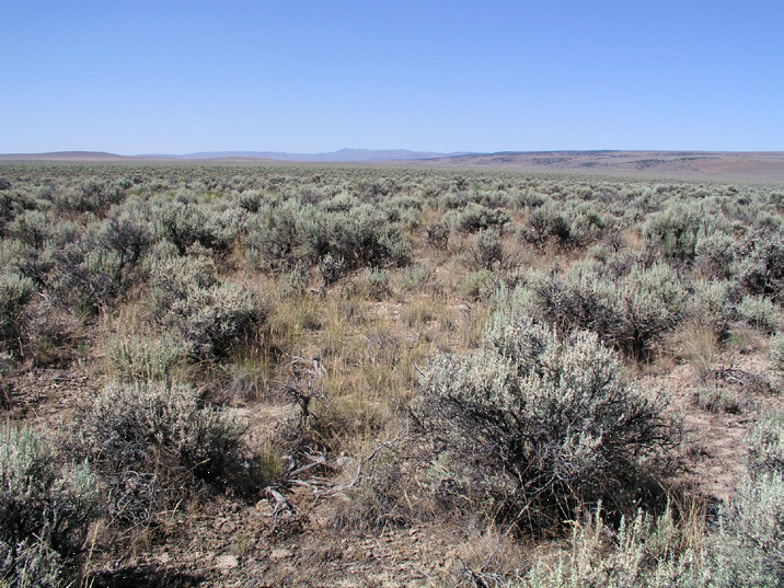 Photo shows Wyoming big sagebrush type ecosystem with warm and dry soils and low resilience and resistance. (These three photos by: Jeanne Chambers)
