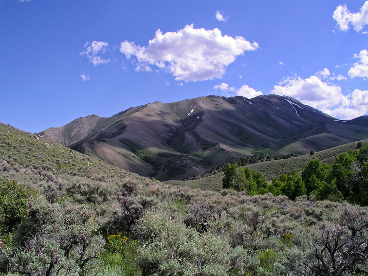 Sagebrush ecosystems vary greatly over the biome, with different species of sagebrush and other plants. Photo shows mountain big sagebrush/mountain brush type with relatively cold and moist soils characterized by high resilience and resistance.