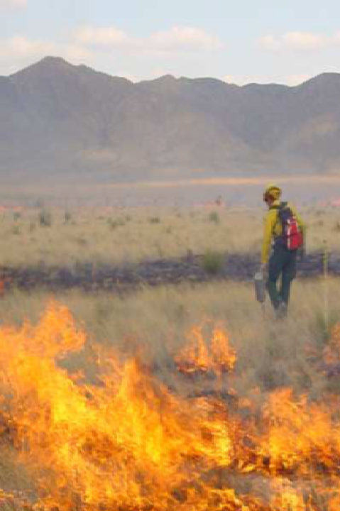 The photo shows a land management personel in a grassland setting in the Chihuahuan Desert with a controlled burn in the foreground.