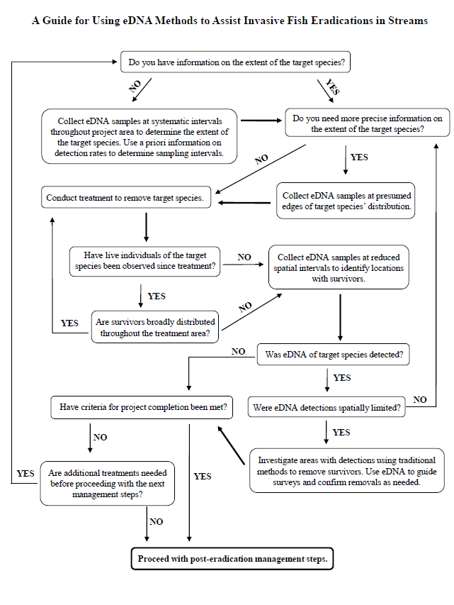 A flow chart showing the steps for using eDNA in eradication from the featured publication.