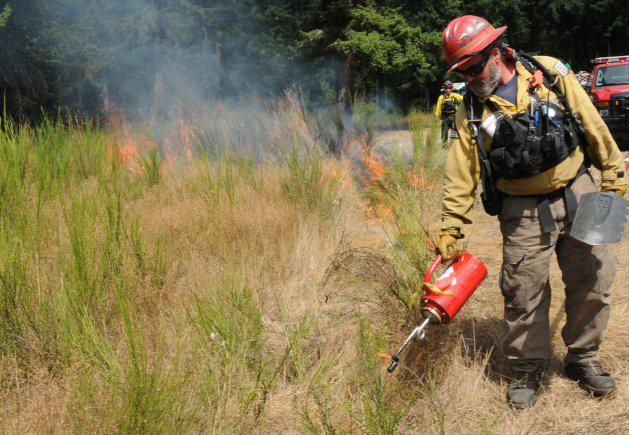 A worker with The Nature Conservancy sets a prescribed burn to consume invasive Scotch broom and other invasive plants covered by Species Reviews in the FEIS database. (Photo by Sgt. Austan R. Owen, U.S. Army.)