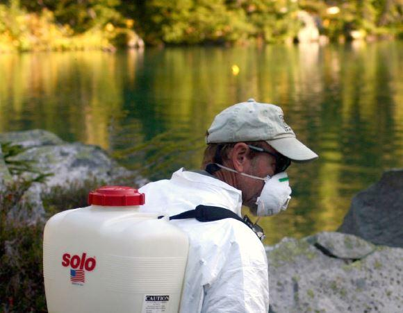 applying piscicide in wilderness lake