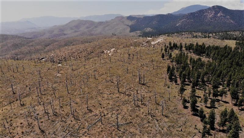 Hayman Fire burn 15 years later (photo: O. Rhoades)