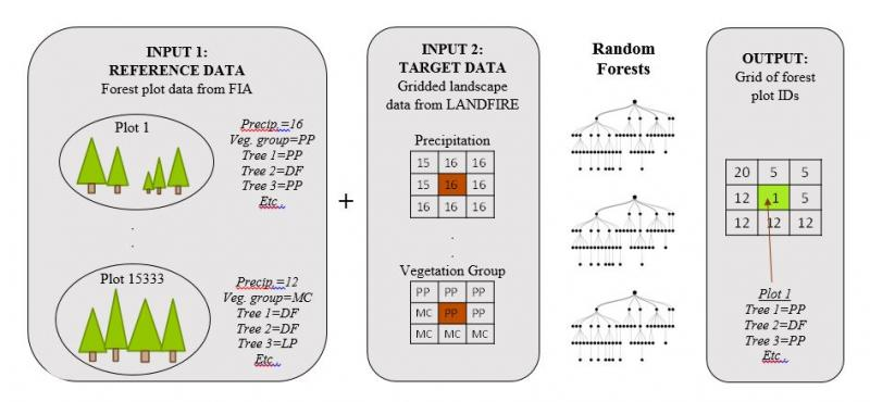 Forest plot data is matched to gridded landscape data from LANDFIRE using the random forests method. The output consists of a grid of the IDs for the best-matching plot for each pixel.