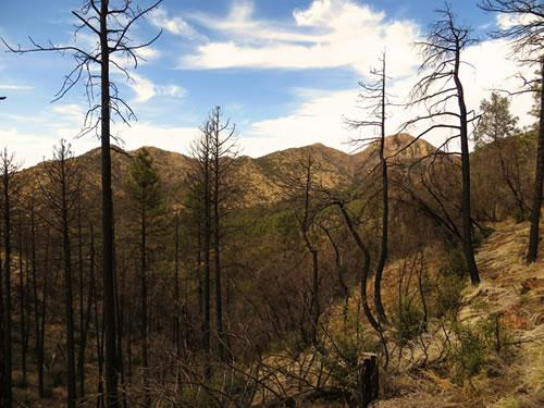 Moderate severity burned area from the Horseshoe 2 Fire in the Chiricahua Mountains, Arizona with a study on assessing large-scale effects of wildfire and climate change on avian communities and habitats in the Arizona Sky Islands