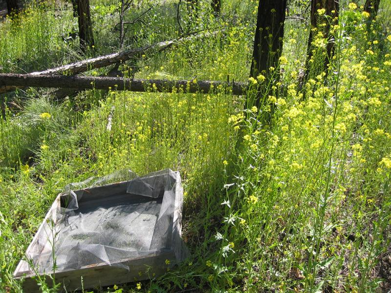 Image shows a litter trap used to collect dead foliage for monitoring