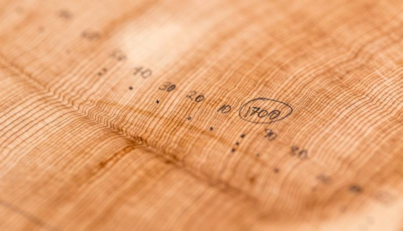 By analyzing centuries-old growth rings from trees in the Intermountain West, researchers are extracting data about monthly streamflow trends from periods long before the early 1900s when recorded observations began.