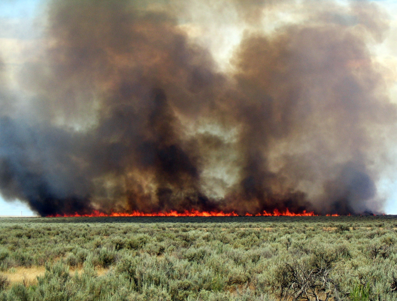 Invasive annual grasses like cheatgrass and the invasive grass/fire cycle that often results are one major concern. Here, a wildfire burns in a Wyoming big sagebrush ecosystem with a cheatgrass understory. (Photo: Douglass Shinneman)