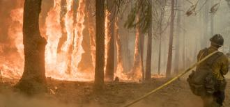 A firefighter is walking away from the camera, pulling a yellow fire hose. Alongside the firefighter, many trees in a forest are on fire, and the whole scene is smoky.