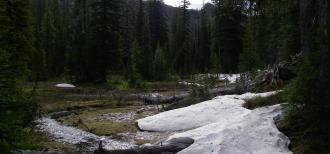 A photo of snow melt turning into a stream within a densely forested mountain landscape