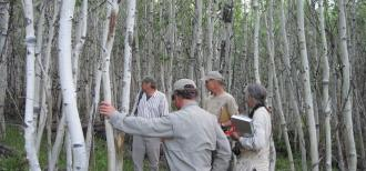 Members of the Monroe Mountain Working Group spend time in the field collecting data and examining aspen in a wide range of conditions. By working together, members develop the trust needed to find consensus when dealing with complex issues.