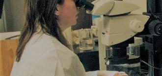 Jackie Ott looks at bud samples through microscope
