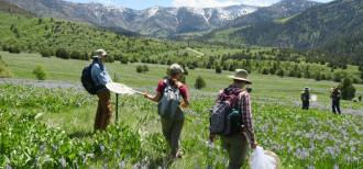 Scientists in the field performing alpine monitoring. The scientists are standing in a field of wildflowers with mountains in in the background.