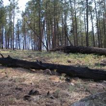 One year after the 2011 Miller Creek fire in the Gila Wilderness, New Mexico. Photo by Sean Parks
