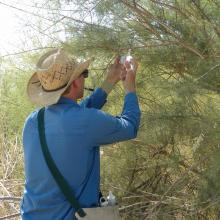 The photo shows a technician hanging up a pheromone lure on a bush.