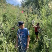 The photo shows two field technicians walking between bushes looking for adult beetles. One of the technicians has a net in hand.