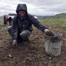 Research Ecologist Francis Kilkenny weeding in the rain to reduce competition at the Quinn River bluebunch wheatgrass reciprocal transplant site, Spring 2016. Photo by Jessica Irwin, RMRS
