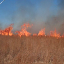 Peak and trough flame structure in a grass fire.