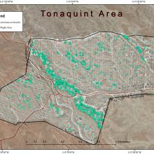 This is the census map based on analysis of 50-m drone imagery from Tonaquint Block in the Red Bluffs dwarf bear-poppy population. Note that the censused plants occur in distinct bands across the landscape.