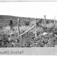 M.W. Tallbot, a pioneer in rangeland ecology and an early scientist working at the Sierra Ancha Experimental Forest, inspects Plot 3 which was one of the first range exclusion plots established in approximately1920 at what was to become the SAEF.