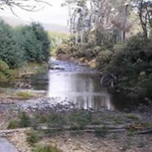 Example of a streamside management zone