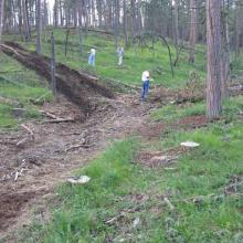 Permanent study plot in 2008 one year following timber harvest.