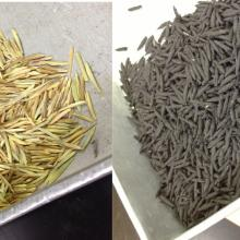 Brome seeds not coated (left) or coated (right) with biochar.