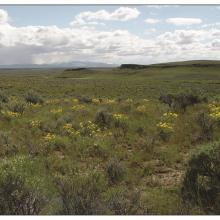 Wyoming big sagebrush, Owyhee County (southwest) Idaho. Photo by Matt Fisk, USDA FS